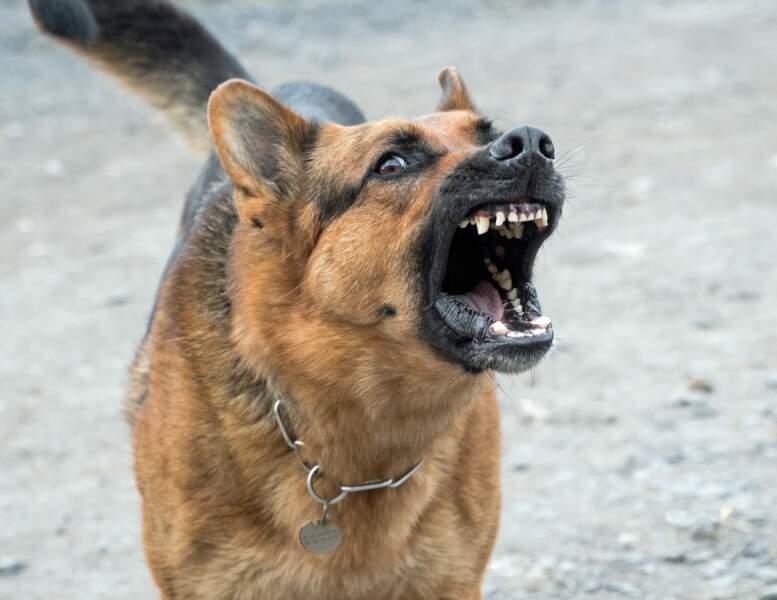 N°3 : Les chiens
