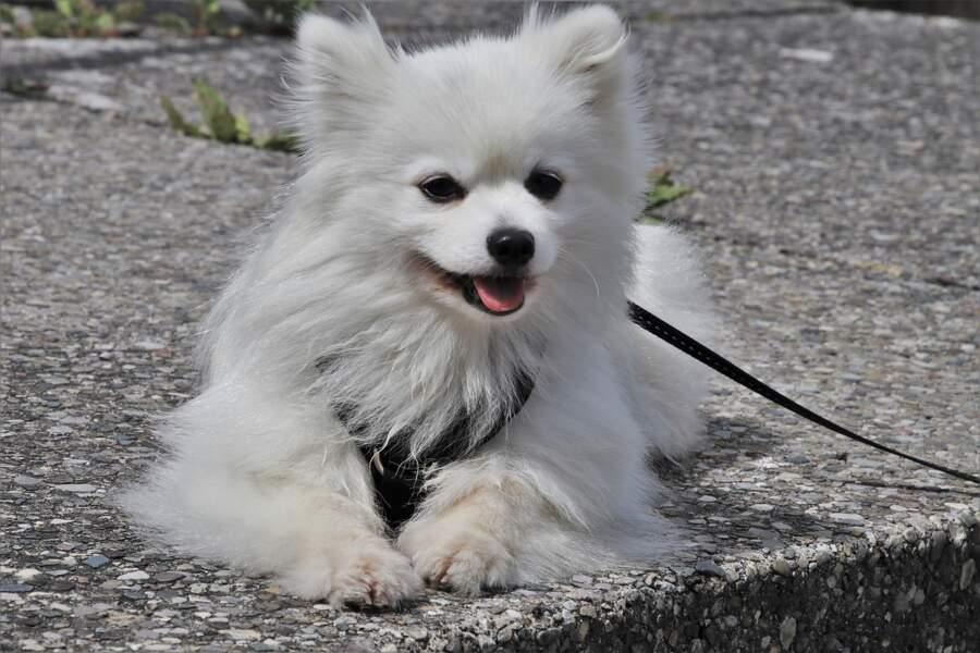 Garder son chien en laisse durant la promenade