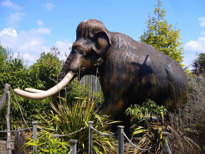 Découverte de 132 fossiles de mammouths