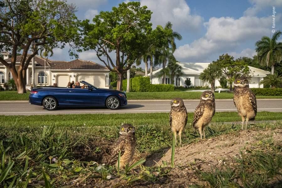 Les vrais nains de jardin, Karine Aigner, États-Unis