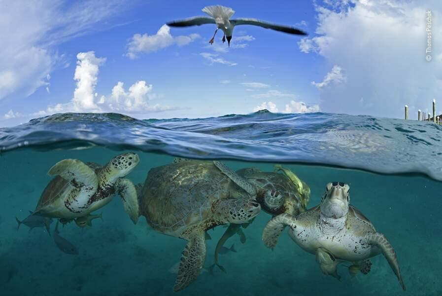 Turtle time machine, Thomas Peschak, Allemagne/Afrique du Sud
