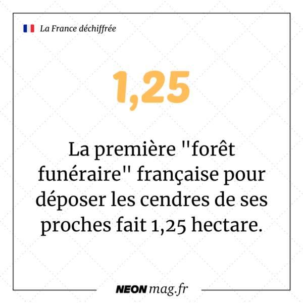 """La première """"forêt funéraire"""" française pour déposer les cendres de ses proches fait 1,25 hectare"""