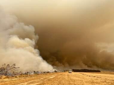 Incendies en Australie : 7 chiffres pour comprendre la gravité de la situation