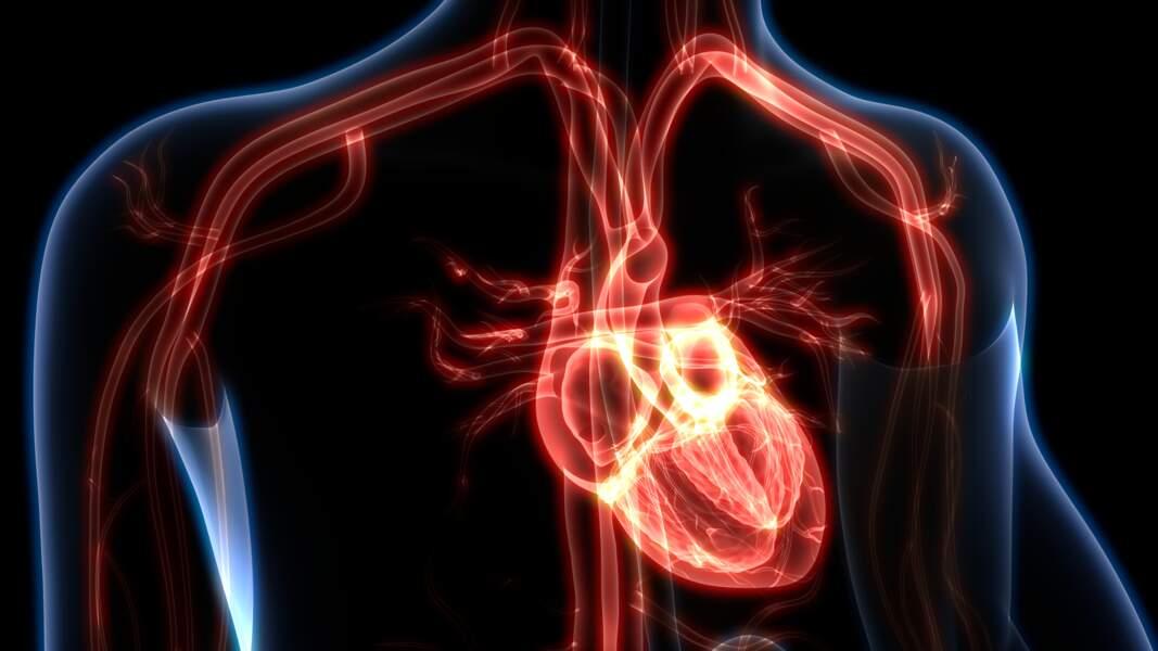 … et ce même coeur pompe 5,5 litres de sang