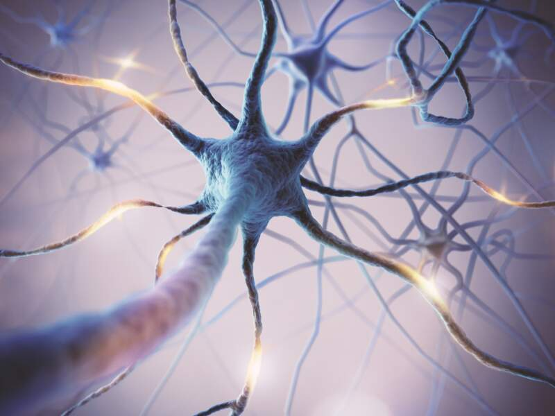 On produit 1 neurone dans l'hippocampe