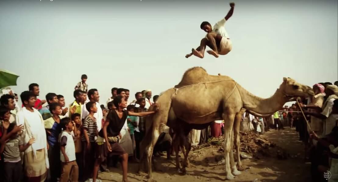 Le saut de chameaux