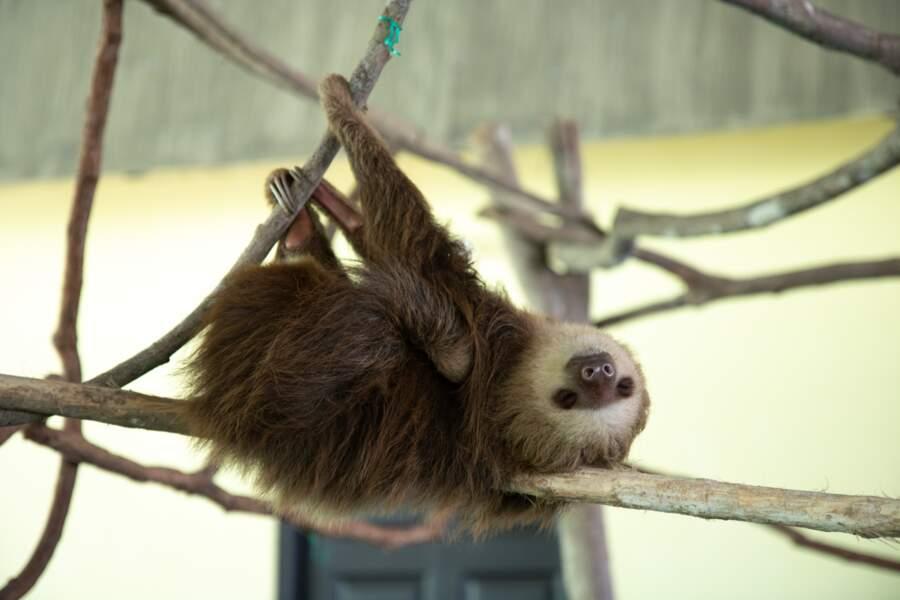 Questions insolites sur les animaux