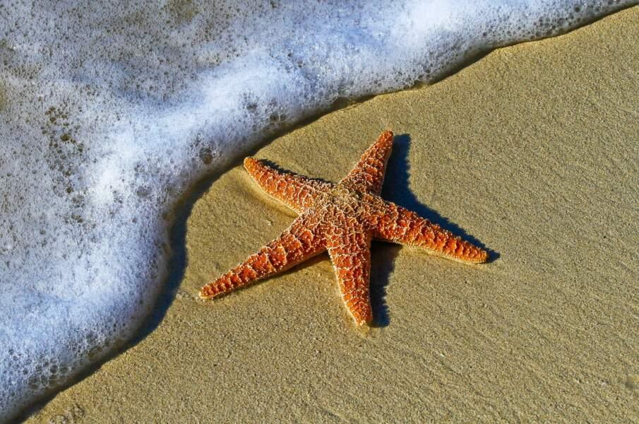 Au lit, adopter la position de l'étoile de mer