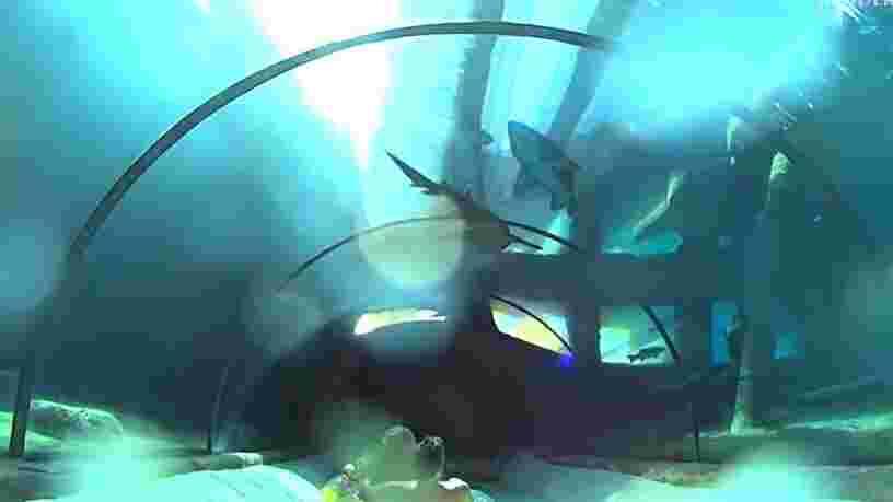 VIDEO: Ce toboggan aux Canaries vous fait glisser sous un aquarium où grouillent des dizaines de requins