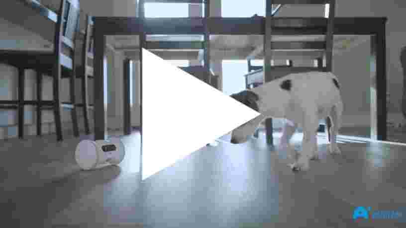 Ce robot joue avec votre animal de compagnie lorsque vous n'êtes pas là