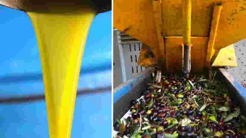 VIDEO: On a visité une fabrique traditionnelle d'huile d'olive en Italie, où une roue géante en granite écrase 5000 kilos d'olives par jour