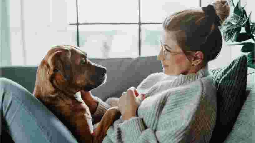 3 découvertes récentes éclairent la façon dont les chiens nous comprennent, s'orientent et vieillissent