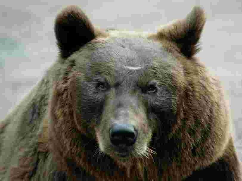 80-Year-Old Russian Man Claims He Survived Fight With Bear And Fall Off Cliff
