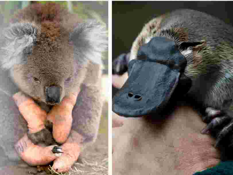 Australia's government listed 113 native animal species that need 'emergency intervention' in order to survive after its devastating bushfires