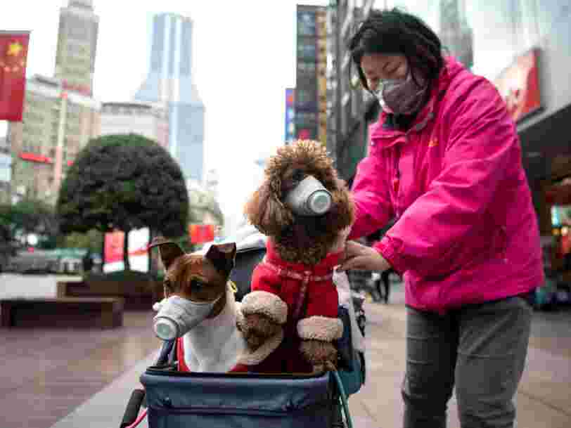 Pets probably won't spread the coronavirus to humans, experts say