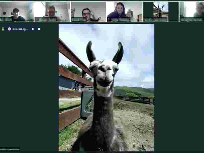 Invite a llama or goat to your next corporate Zoom meeting or video call for under $100