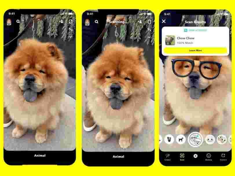 You can now use Snapchat's augmented reality camera to identify dog breeds and plant species