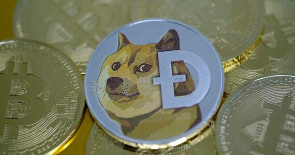 Le plus grand détenteur de dogecoins est désormais virtuellement milliardaire - Business Insider