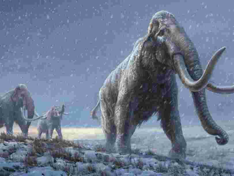 L'ADN le plus vieux au monde découvert sur des dents de mammouth