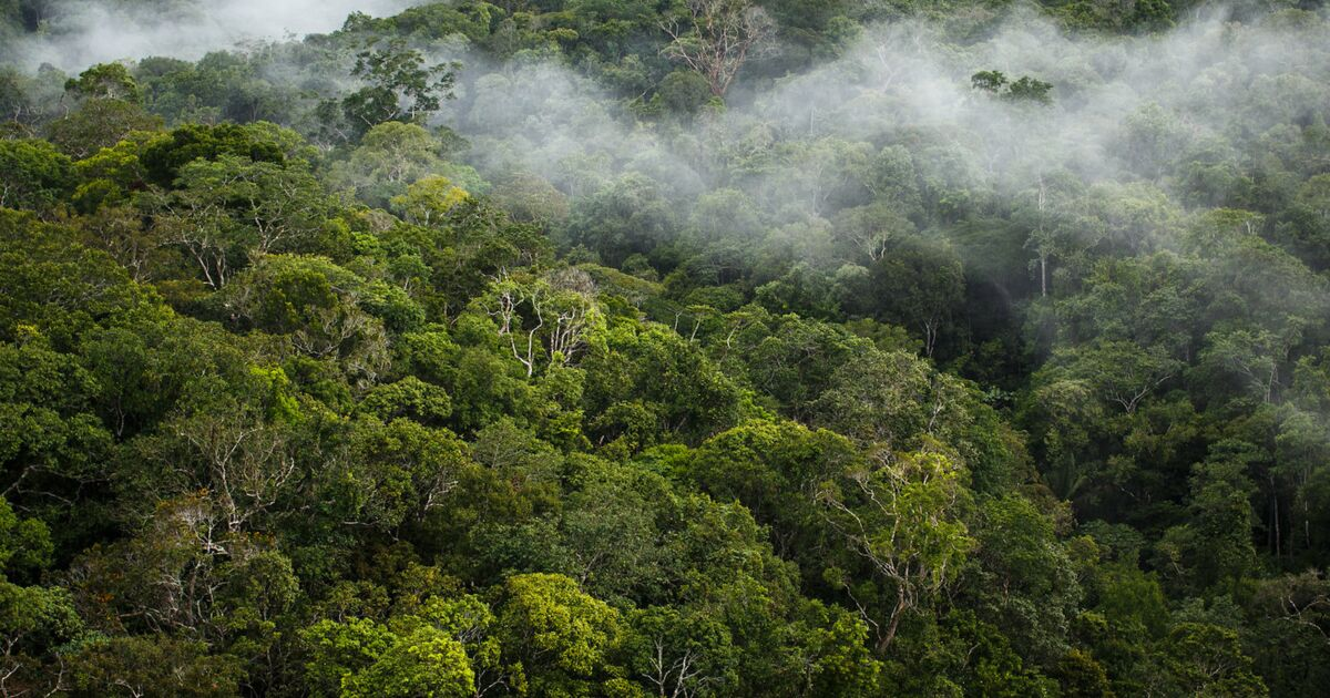 Les 8 pays européens les plus responsables de la déforestation dans le monde