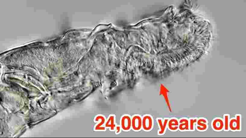 Des scientifiques ont ressuscité un animal microscopique après 24 000 ans de congélation
