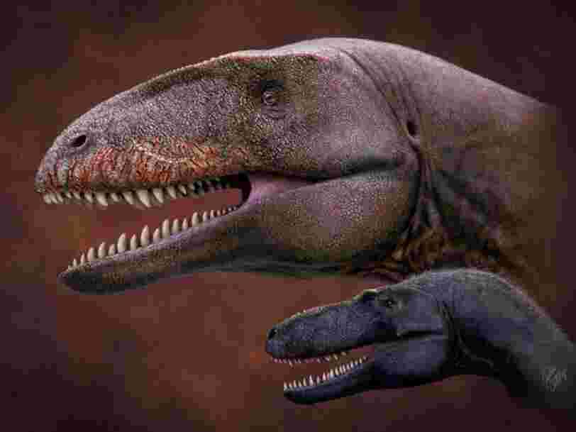 Des scientifiques ont découvert une nouvelle espèce de dinosaure aux dents de requin