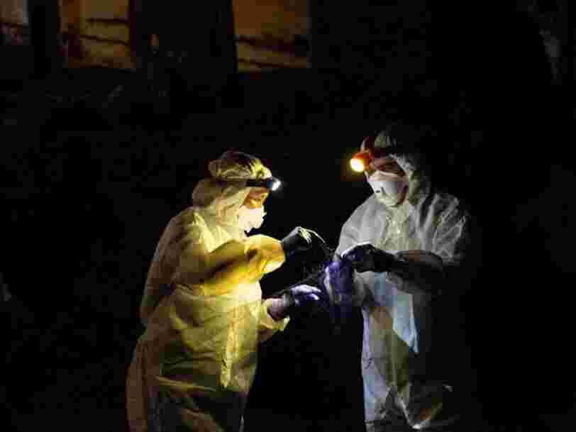 Les coronavirus de chauves-souris pourraient infecter plus de 400 000 personnes par an, selon une étude