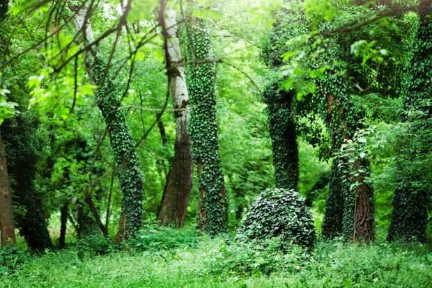 Des plantes toxiques ou invasives aux vertus cachées