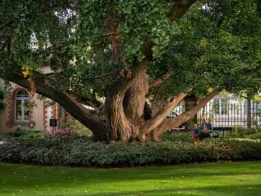 Les plus beaux arbres de l'année
