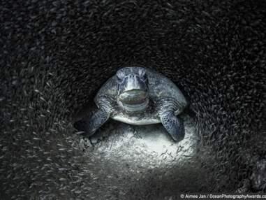 Ocean Photography awards 2021 : les plus belles photos sous-marines de l'année