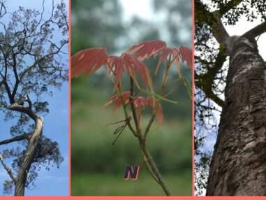 15 espèces d'arbres menacées, à protéger d'urgence