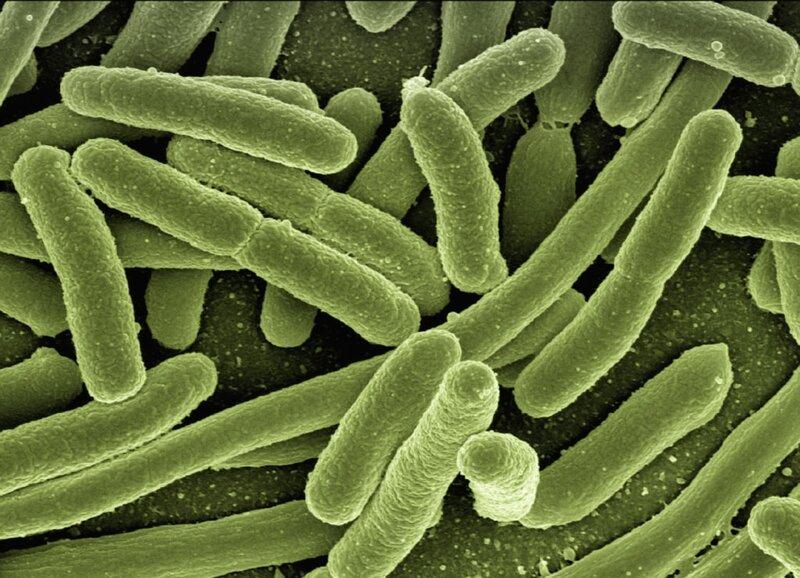 Notre corps possède 10 000 milliards de cellules. Mais combien abrite-t-il de bactéries?