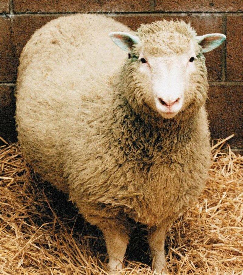 De quoi est morte la brebis Dolly, premier mammifère cloné en 1996 ?