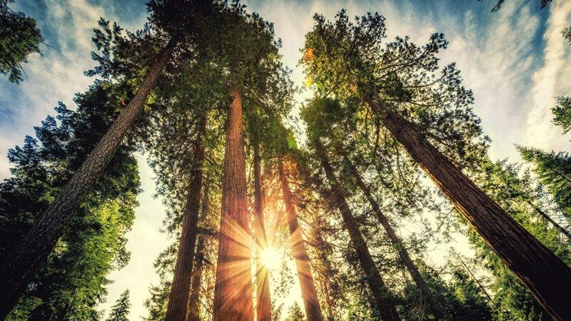 Connaissez-vous les grands arbres ?