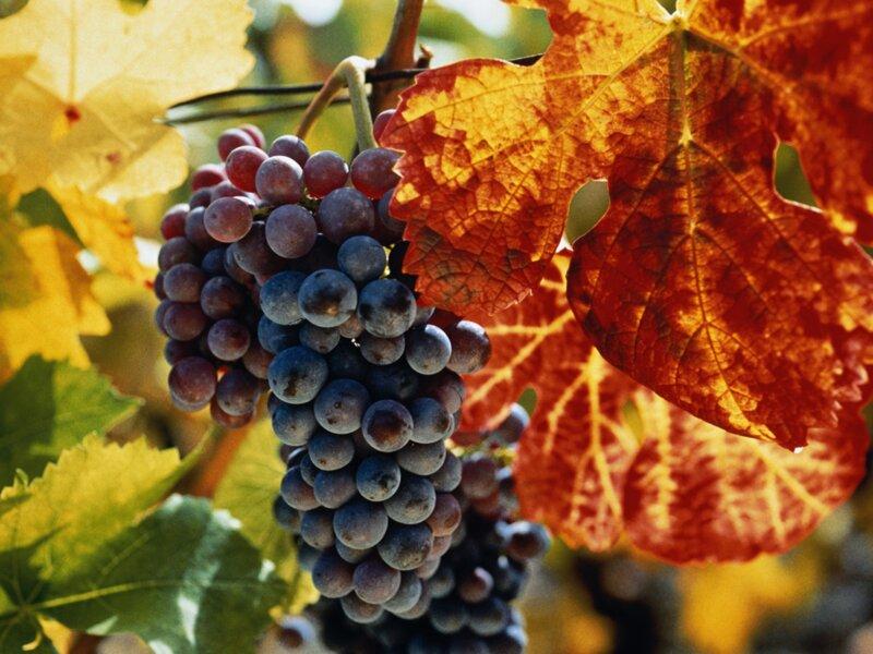 Le vrai ou faux du vin
