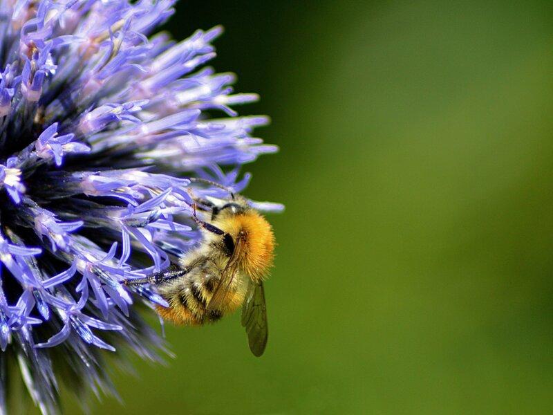 Testez vos connaissances sur les abeilles