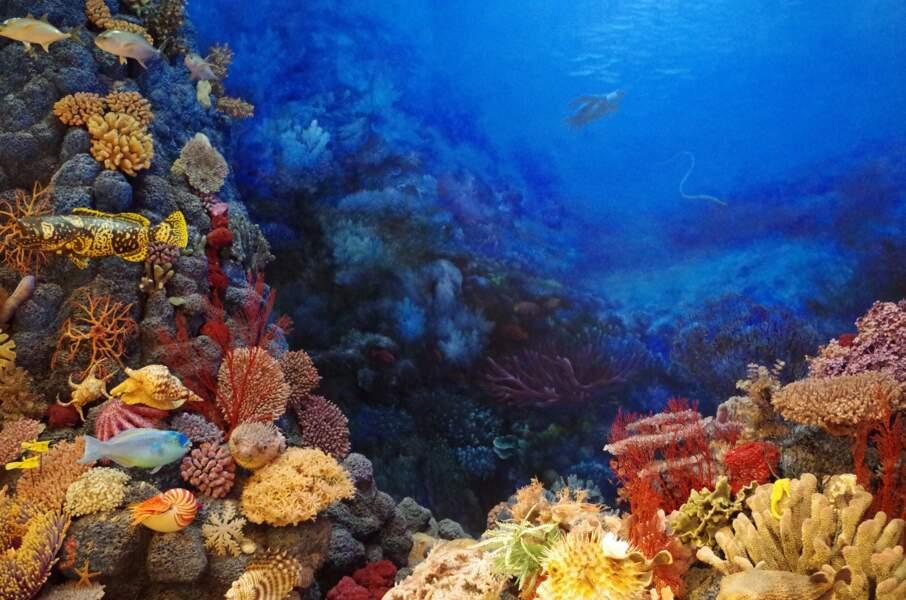 1. Abriter les coraux...