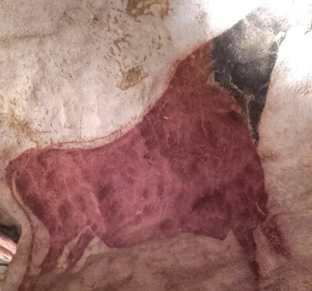 Vache rouge à tête noire.
