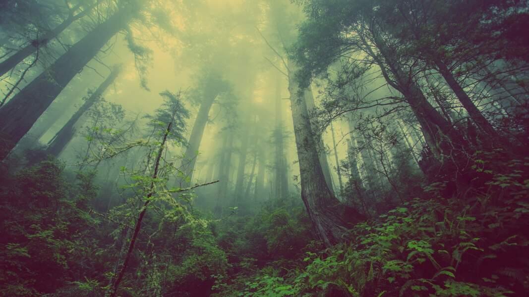 6. Replanter les forêts...