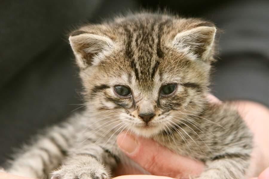 Une chatte a donné naissance à plus de 420 chatons