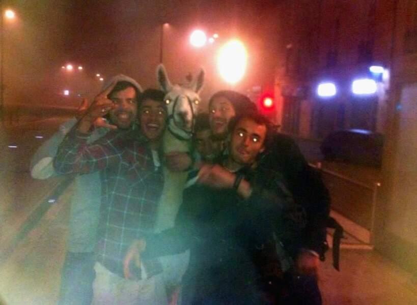 Serge le lama en escapade dans Bordeaux