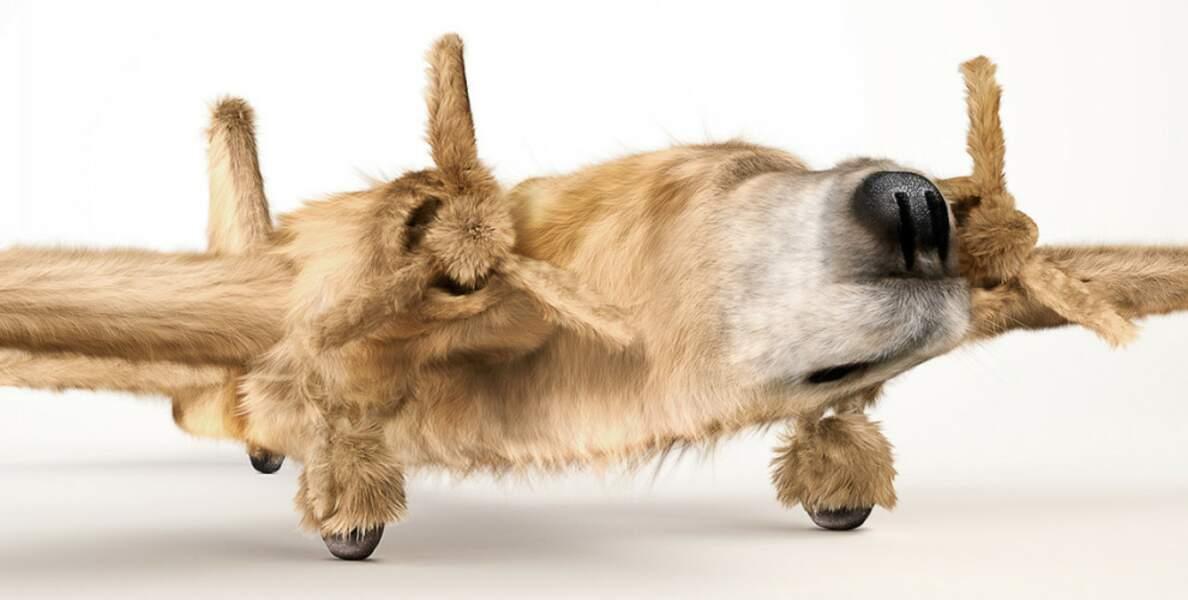 Maquette d'avion en poils de chien, du studio INK