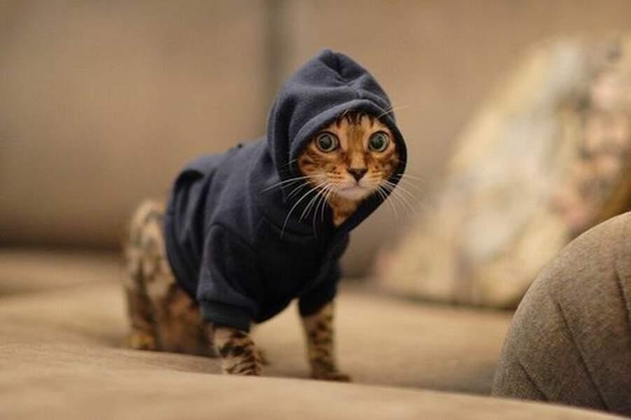 Gangsta Cat