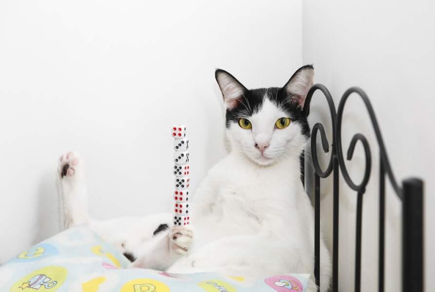 Record de dés empilés sur une patte de chat