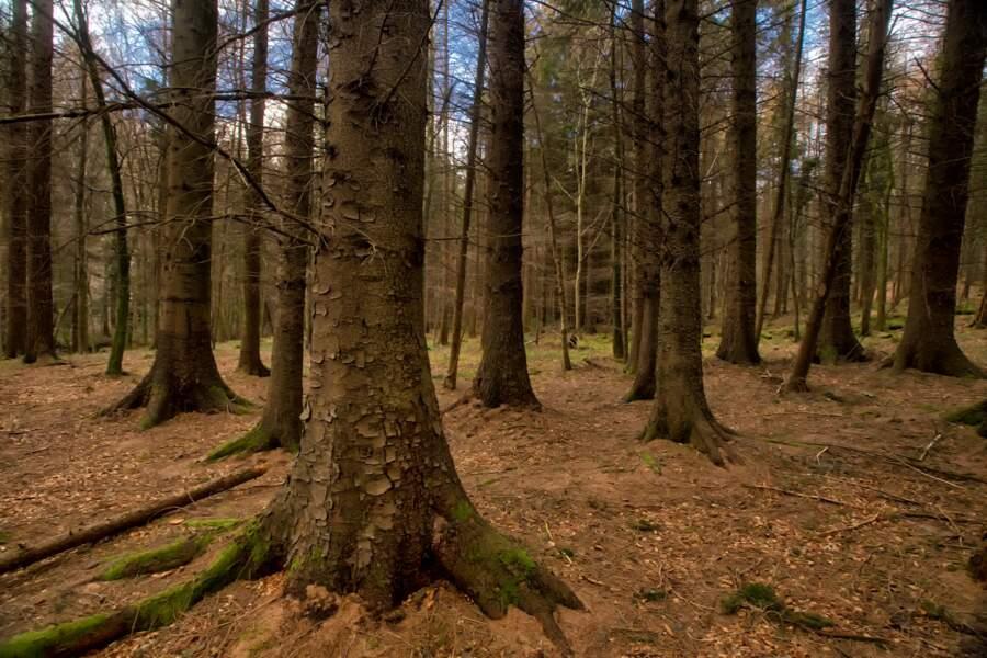 La forêt de Tollymore en Irlande du Nord