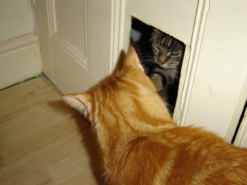 La chatière a été inventée par… Isaac Newton !