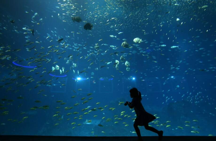 Le Resorts World Sentosas est le plus grand aquarium au monde. Il accueille 80 000 animaux !