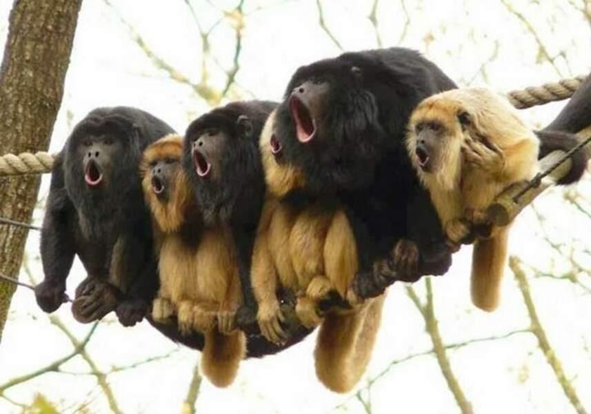 Choré de primates