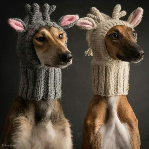 Prêts pour Noël