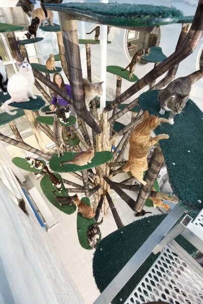 Le plus grand arbre à chat